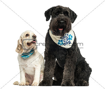 Bouvier des Flandres and American Cocker Spaniel sitting togethe