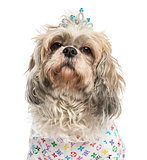 Close-up of a dressed-up Shih Tzu wearing a diadem, 4 years old,
