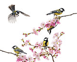 group of great tit perched on a flowering branch, Parus major, i