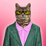Stylish European Shorthair wearing a suit and sunglasses in fron