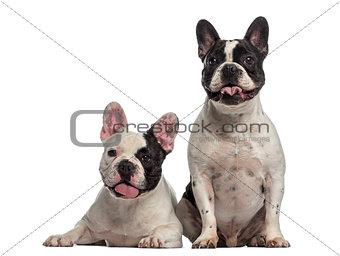 French Bulldog sitting together