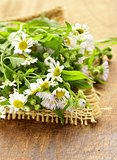 natural fresh daisy wildflowers on wooden background
