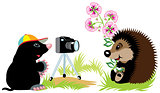 hedgehog photographer