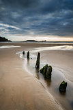 Landscape with old groynes protruding from sand on Rhosilli Bay
