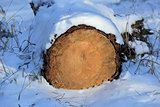 wooden log under snow
