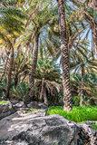 Palm garden Misfah Abreyeen