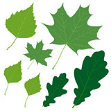 Set of seven vector green leaves for your design