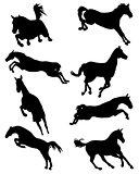 horses in jump