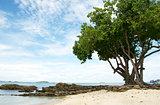 big tree on the beach