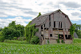 dilapidated barn in cornfield
