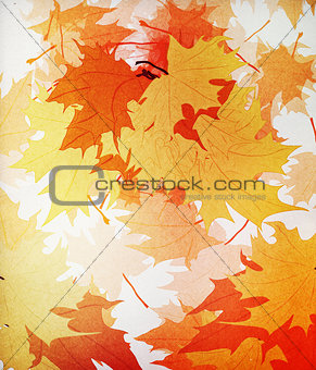 Autumn mpaple leaves background