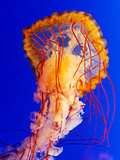 spectacular jellyfish