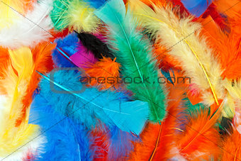 background of colored feathers of birds.