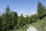 Devero Alp, mountain path through tre forest