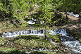 River in the forest of Devero Alp