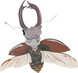 stag-beetle in fly