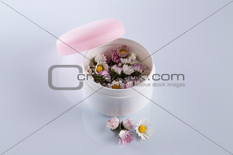 Daisies in cosmetic cream box
