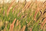 Grass Background - Nature and Colors of Beauty