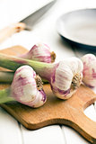 fresh garlic on cutting bard