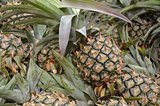 Photography of pineapple in the market for sell