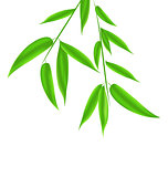 Bamboo leaves pattern with space for your text