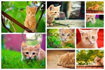 Peaceful orange red tabby male kitten. Set Collage.