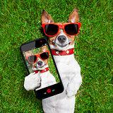 funny selfie dog