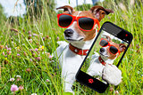 selfie dog in meadow