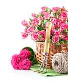 Pink rose in wicker basket with garden tool