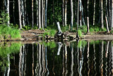 Forest lake shore. Vsevolozhsk district, Leningrad region, Russia