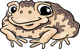toad amphibian cartoon illustration