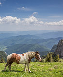 Brown and white horse at the top of Ceahlau mountain range