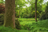 Landscape image of beautiful vibrant lush green forest woodland