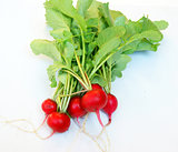 Fresh radish with vegetable garden