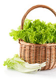 Fresh leaf lettuce in wicker basket