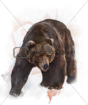 Watercolor Image Of  Grizzly Bear