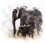Watercolor Image Of  Elephants
