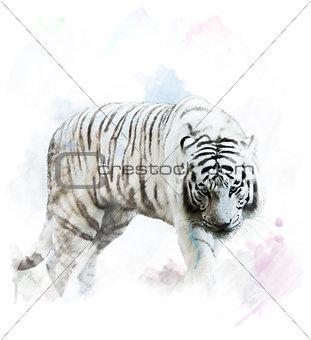 Watercolor White Tiger Portrait