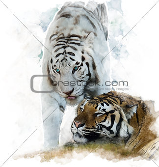 Watercolor Image Of  White And Brown Tigers