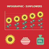 sunflower infographic
