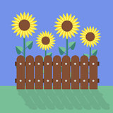 sunflower flat design