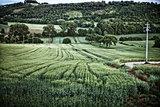 Farmland Perugia