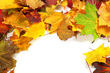 Autumn maple-leafs