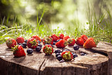 Blueberry and strawberries on wood in nature