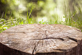 Stump on the green grass in the forest