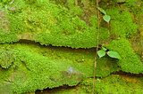 Texture of stone with moss
