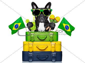 brazilian dog