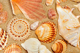 some seashells on the sand of a beach
