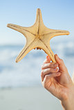 Woman holding starfish on the beach
