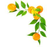 Fresh mandarins border